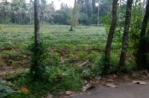 Land for sale in Ernakulam - 4/11 - House for sale in Ernakulam