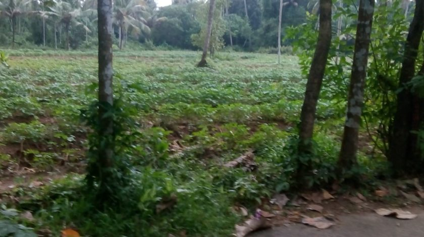 1 2 Acre land for sale at Munduruthi, Paravur - 2Lakhs per cent